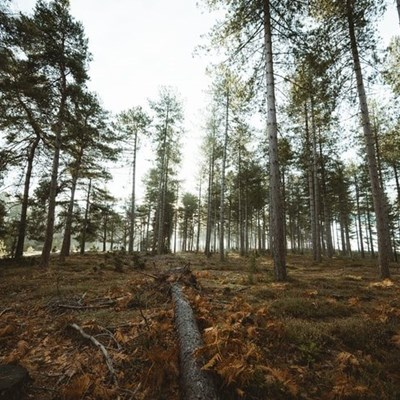 Young girls encouraged to take up careers in forestry
