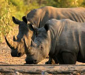 Wildlife differences in Northern and Southern Kruger