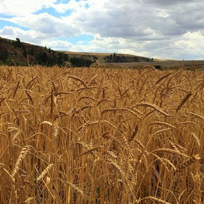 US expert to evaluate grain location differential system