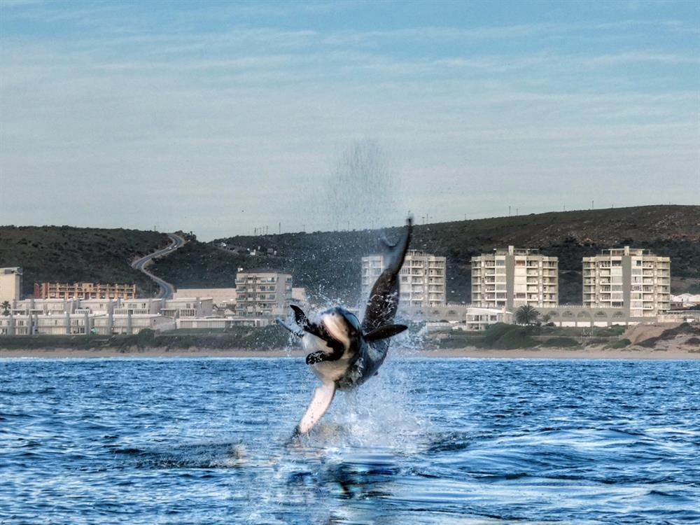 Sharks make waves globally