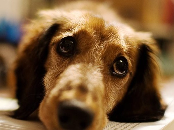 Another dog put down after negligence