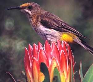 Fires expose birds to insecticides