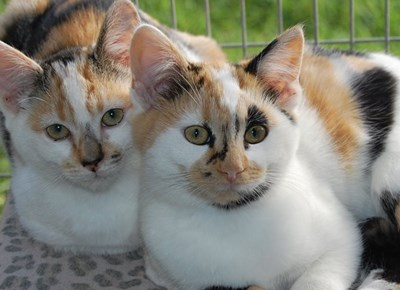 SPCA adoptions