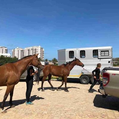 Horse patrols a big success
