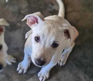 Adoptions at the SPCA