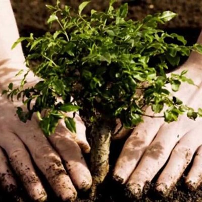 Gardening tips for growing trees