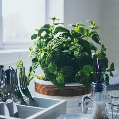 Life hacks for healthy houseplants