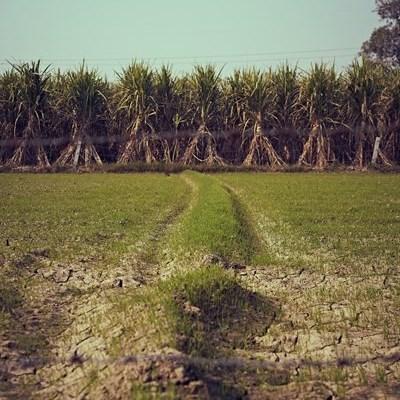 Sugar masterplan brings hope to cane growers