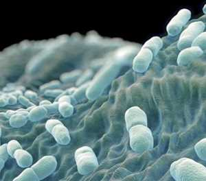No listeriosis outbreak, says NICD as it distances itself from media reports