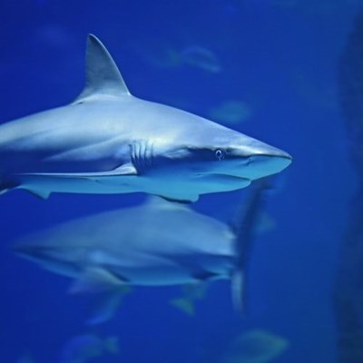SA invention looks to save sharks