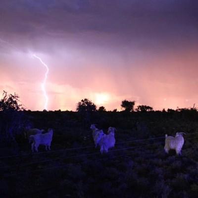 Farm worker struck dead by lightning