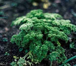 Fresh herb demand falters as Covid-19 shuts restaurants