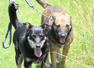 Odin dogs up for adoption