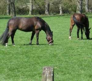 Concern about African horse sickness in protection zone