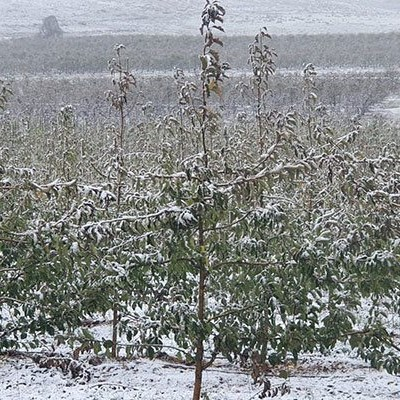 Tomatoes, bananas worst affected by country-wide cold fronts