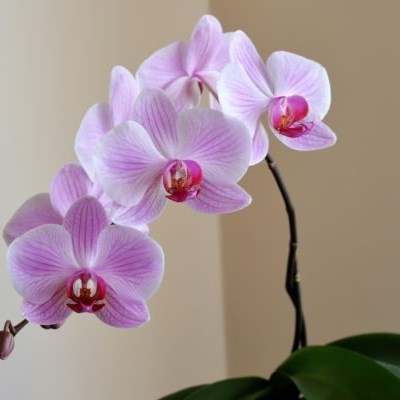 5 low maintenance plants you should grow in your bathroom