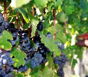8 ways wine will change in 2020