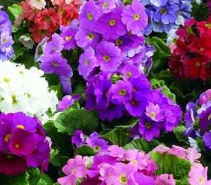 Tips for the garden in June