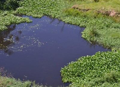 Indringerplante versmoor riviere