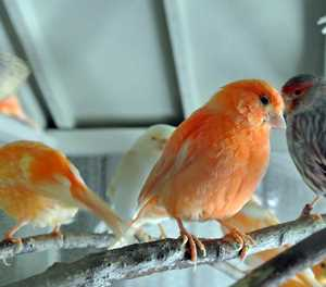 Guidelines for keeping birds as pets