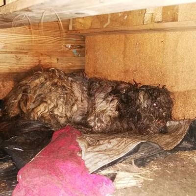 Pacaltsdorp dog dies suffering after bite