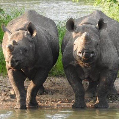 Rhino poaching decreases by 53% for first half of 2020