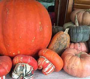 It's pumpkin planting time...