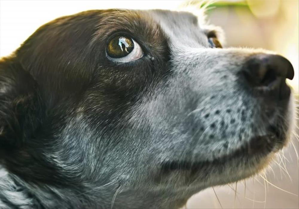Hoe Kon Ek Verhoed Dat My Hond Byt