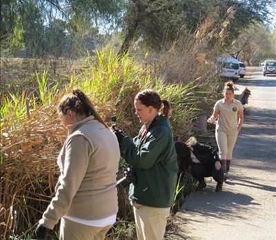 Cango Wildlife wy skoonmaak aan Madiba