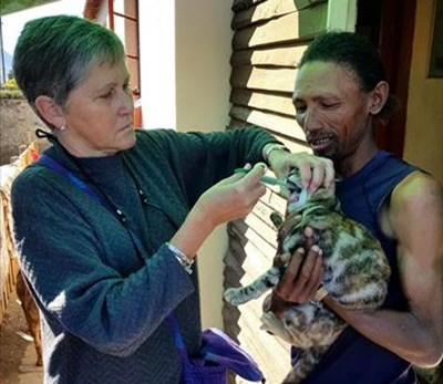 Volunteers reach out to cats