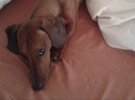 Hondjie weer veilig tuis na motorongeluk