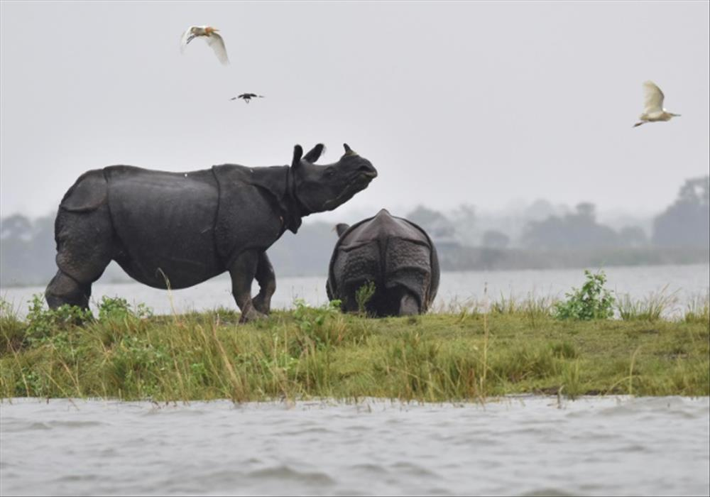 South Asia floods' toll keeps risingWeather