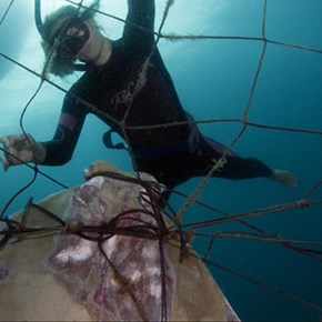 Plea for removal of shark nets