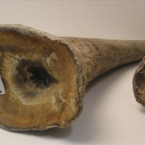 Concerns raised over online rhino horn auction