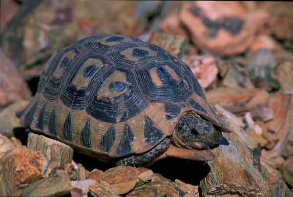 Tortoises are not pets | Mossel Bay Advertiser