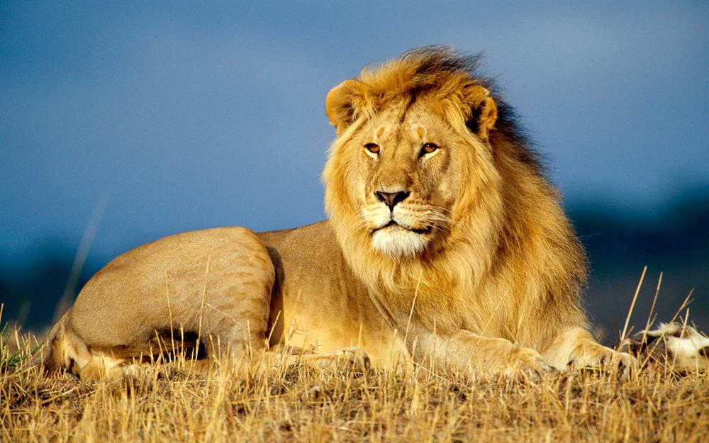 Zim company under fire for lion hunting raffle | George Herald