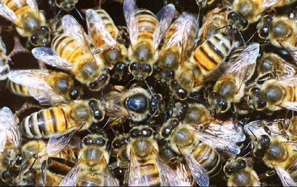 Charter to help bees and pollination services | George Herald