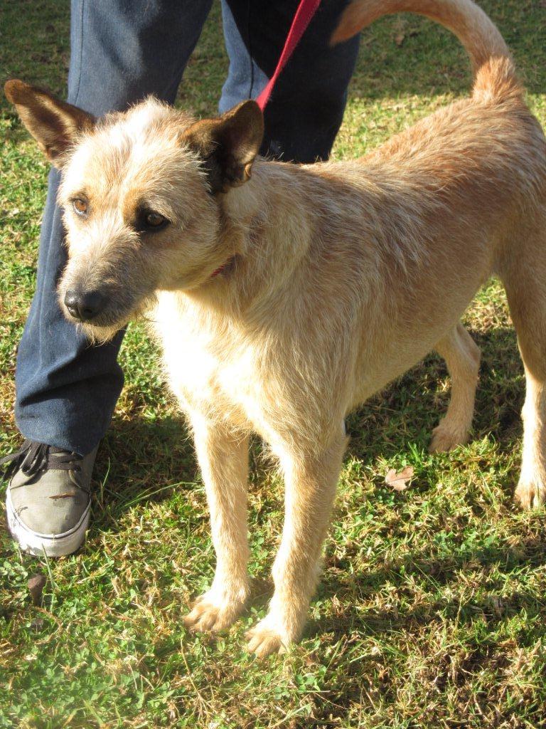 Up for adoption Garden Route SPCA